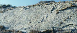 Fossili dei Lavini di Marco Rovereto