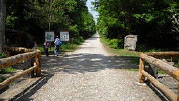 Riserva Naturale Bosco Fontana