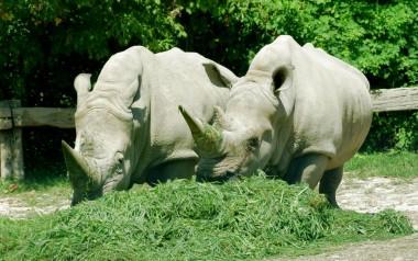 Parco Natura Viva Zoo Safari Pastrengo